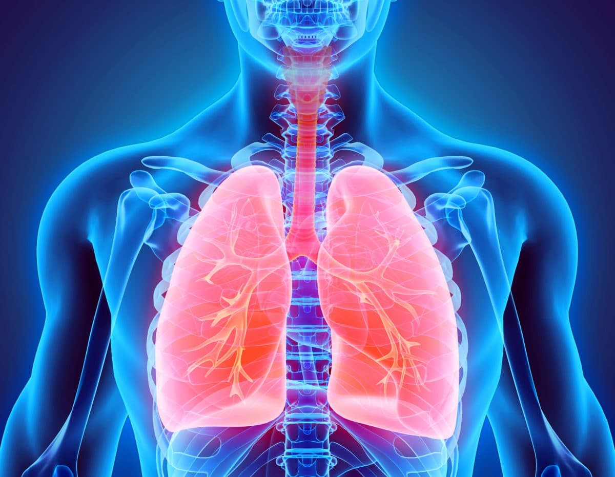 Chapter 7 – Respiratory System