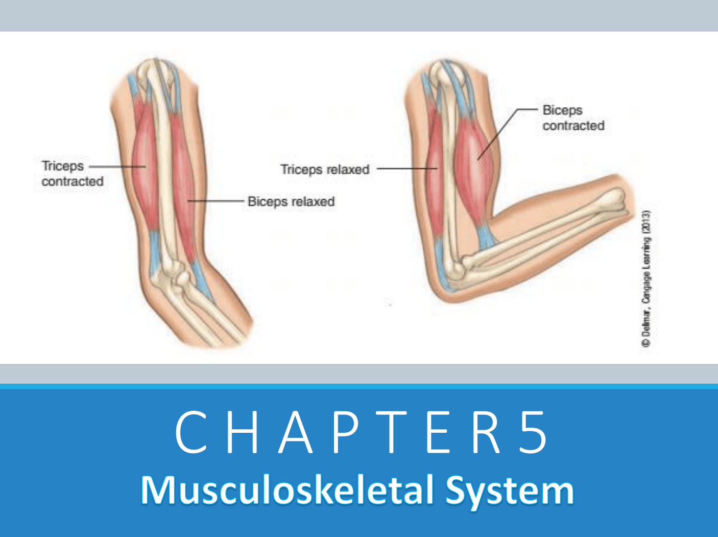 Chapter 5: Musculoskeletal System