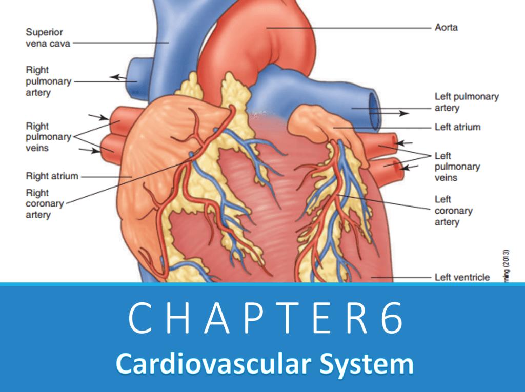 Chapter 6: Hệ tim mạch